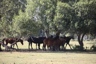 Ponies under trees