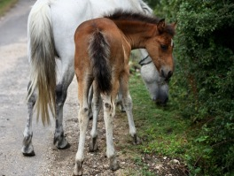 Foal and pony