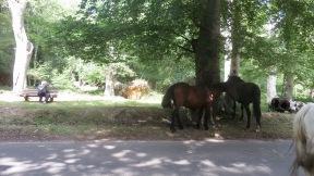 Derrick photographing ponies