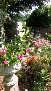 Rose Garden with lilies