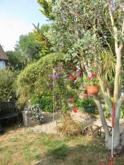 Garden scene from grass patch