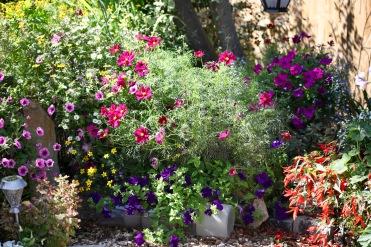 Petunias, cosmoses, begonias, bidens in patio border