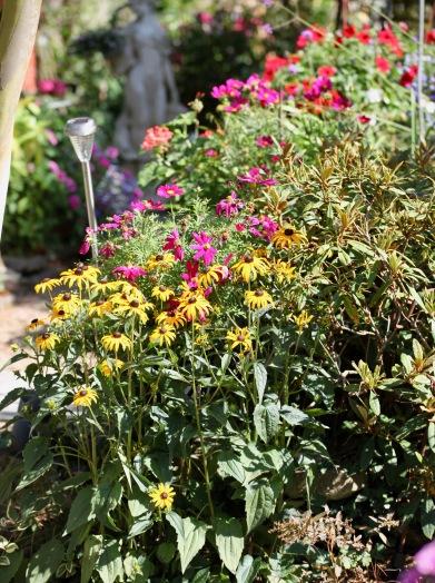 Rudbeckia, cosmoses, petunias