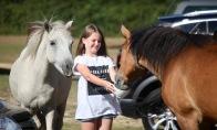 Girl feeding ponies
