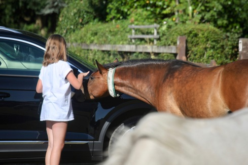 Girl feeding pony