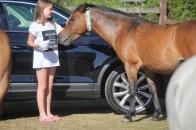 Girl feeding pony