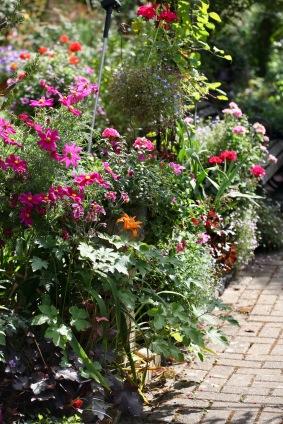 Cosmoses, day lily, geraniums, lobelias
