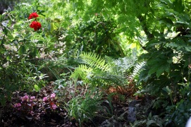 Ferns, begonias, geraniums