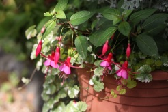 Fuchsia Display