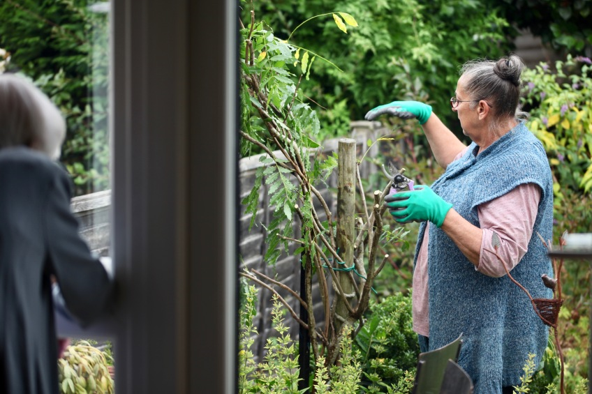 Jackie pruning wisteria, Mum at window