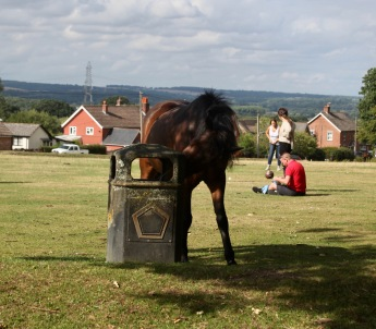 Pony at bin