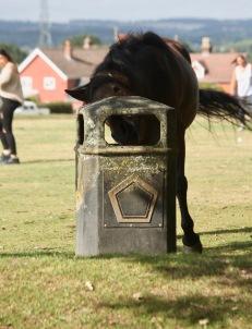 Pony at bin