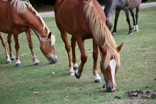 Ponies and flies