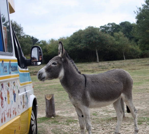 Donkey and ice cream vendor