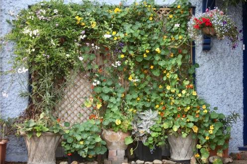 Garage door planting