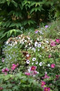Petunias, begonias, lobelia, cosmos