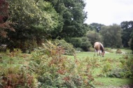 Pony in landscape with bracken