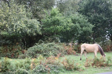 Pony and apple tree