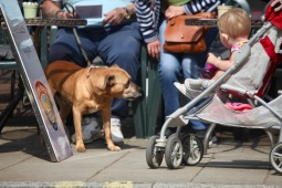 Dog, child in buggy