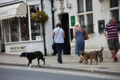 Dogs and walkers