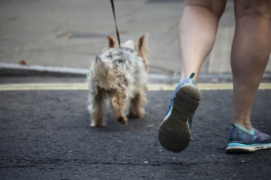 Dog walker's feet