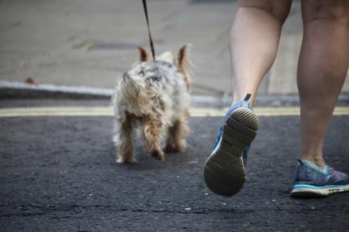 Dog walker's feet