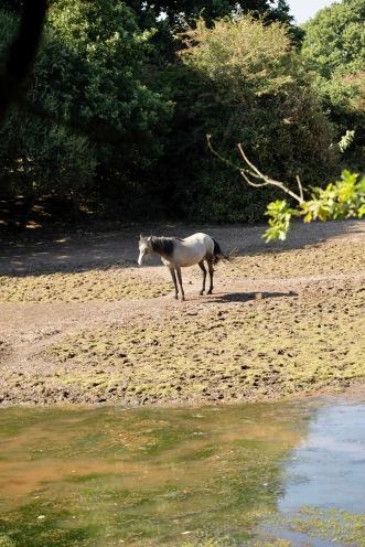 Pony on dried up lake