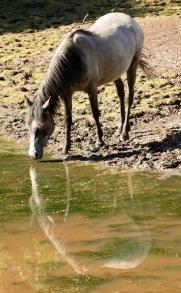 Pony reflected