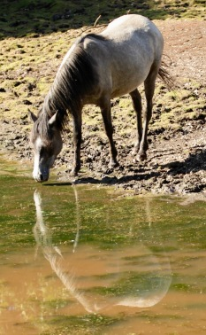 Pony reflected