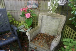 Autumn leaves on decking, begonia by Helen K