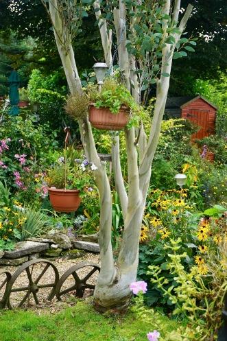 Eucalyptus by Helen K