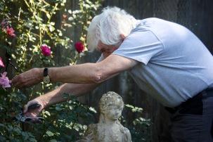 Derrick pruning roses