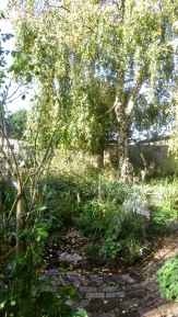 Weeping Birch Bed