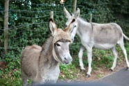 Donkey and foal