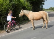 Cyclist and pony