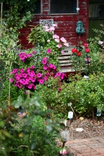 Rose Garden - petunias, lobelia, geraniums, Love Knot