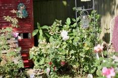 Rose Garden, Margaret Merrill, fuchsia, hydrangea