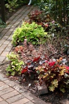 Rose Garden heucheras