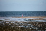 Dog walker on sandbank, gulls