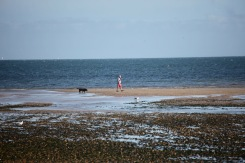 Dog walker on sandbank, gulls