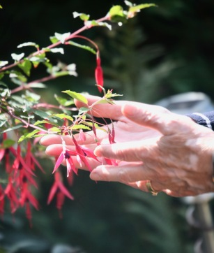 Fuchsia, Pauline's hands