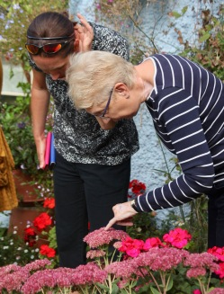 Pauline and Jo inspecting Sedum
