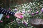 Fuchsia Delta's Sarah, Pauline's hand
