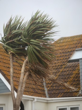 Palm windswept