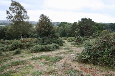 Landscape with rowan tree
