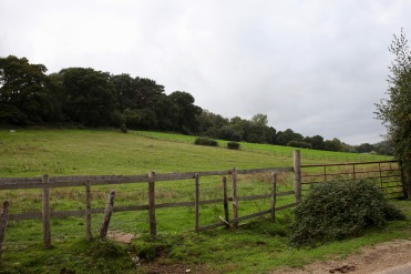 Landscape with distant deer