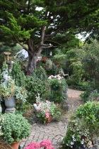 Garden view towards Ace Reclaim bench