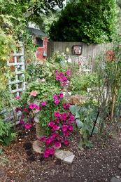 Petunias in Rose Garden