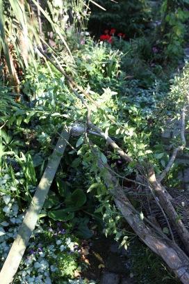 Fallen Snake Bark Maple and beam