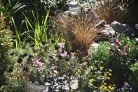 Geraniums, bidens, grasses
